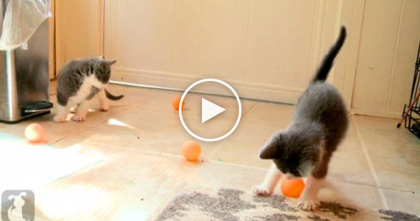 What These Kittens Are Doing With Pingpong Balls Is Extremely Cute!