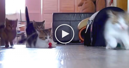 When You See What These Crazy Energetic Kittens Are Doing, It'll Bring A Smile To Your Face!