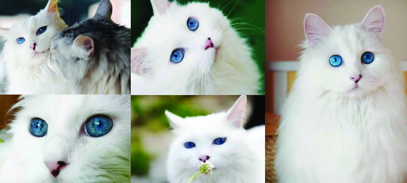 beautiful-cat-amazing