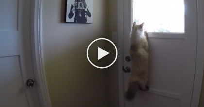 This Cat Tries To Look Outside, But What He Does Next?… PURE Genius!