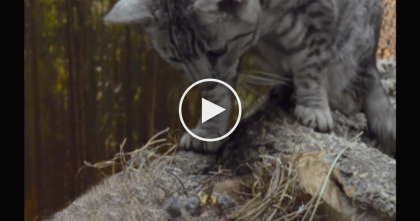 Mother Cat Notices Abandoned Baby Birds, Then Does The Unthinkable… WOW, Just Watch This!!