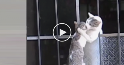 Mommy Notices Her Kitten Outside, But You Gotta See What She Does… AMAZING.
