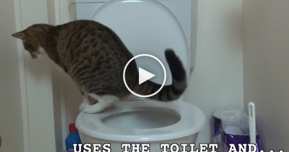 Wow, This Cat Has An Amazing Talent And You're About To See It… AMAZING.