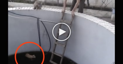 He Tried To Rescue A Stranded Cat, When All Of A Sudden… OMG!!
