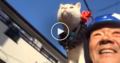 What This Kitty And Human Do Together? You Won't Believe Your Eyes… WOW.