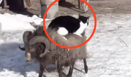 This Kitty Needs A Ride, But When You See What's Happening… Unbelievable!