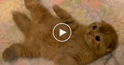 He's Trying To Pet This Fluffy Kitty, But It's Impossible. The Reason Why? You MUST See It…