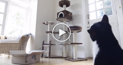 Wanna Make Your Cat Happy? First You Need To See This Video… LOL.