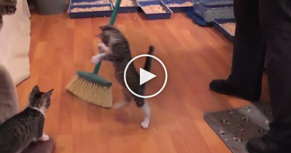 She Doesn't Sweep The Floors Anymore, The Reason Why? You Gotta See…