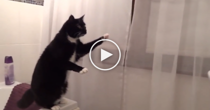 OMG… Just Wait Till You See These Cats Discover Mirrors For The First Time!
