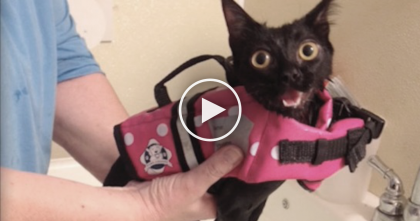 Paralyzed Kitten In A Wheelchair Gets The Best Gift Anyone Could Ask For…