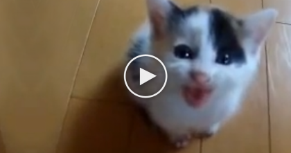 Prepare Yourself, This Adorable Kitten Will Melt You To Pieces… Awwww!!