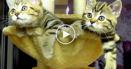 These Cats Notice The TV, But When They See Whats Playing… Just WATCH Their Reaction!