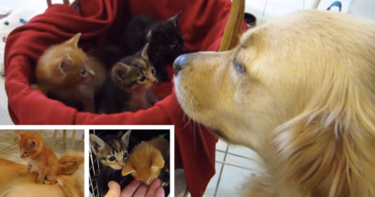 These Kittens Had No Daddy, But Then Something Amazing Happened… I Can't Stop Smiling.