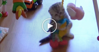 They Bought Their Baby A Toy, But When The Kitten Discovers It?? Now Watch What Happens…