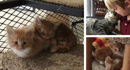 They Created A 'Cat Library' In Their Office for Rescue Kitties. Employees Have Now Been…