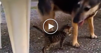 They Took This Kitten Inside The House, But What Happens Next? Unbelievable…