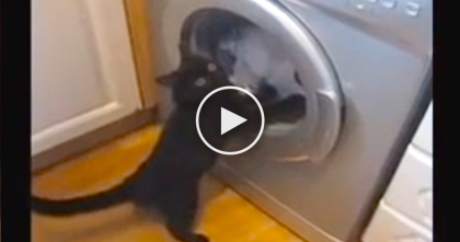 "They Turned On The Washer, But Didn't Expect Their Cat's Response… ""Let Me Save You"""
