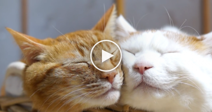This Basket Of Cats Is Just TOO Much… It'll Break Your Screen With Cuteness!