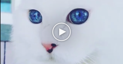 This Cat Is Unlike ANYTHING You've Ever Seen…Just Look At His Eyes, WOW.
