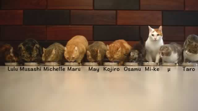 10-cats-eating-together