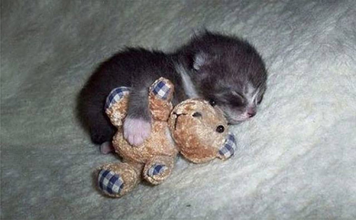 11_kitten_hugs_bear