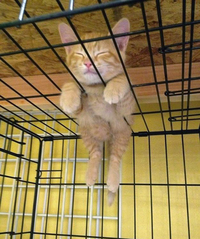 14_kitten_loves_cage