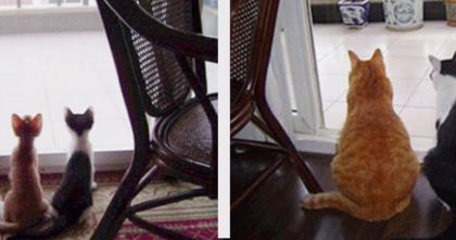 18 Pictures Of Cats That Grew Up (From Kittenhood To Adulthood) #7 = PRICELESS…