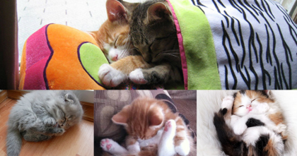 21 Pictures Of Sleepy Kittens That Are SOO Cute, Your Heart Will Smile… Awwww!!!