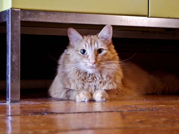27_cat_under_couch
