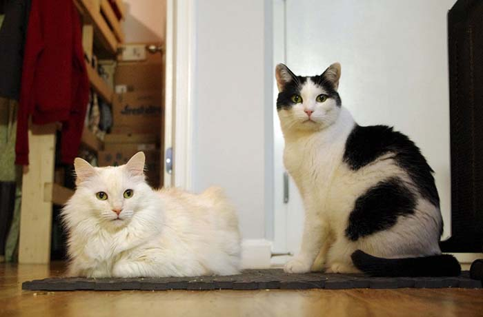 31_two_cat_stare