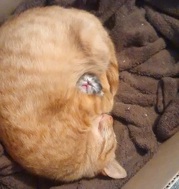 3_tiny_kitten_with_mommy