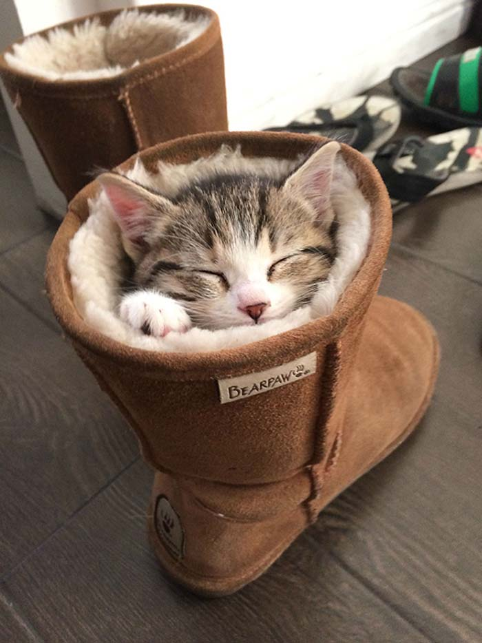 4_cat_in_boot
