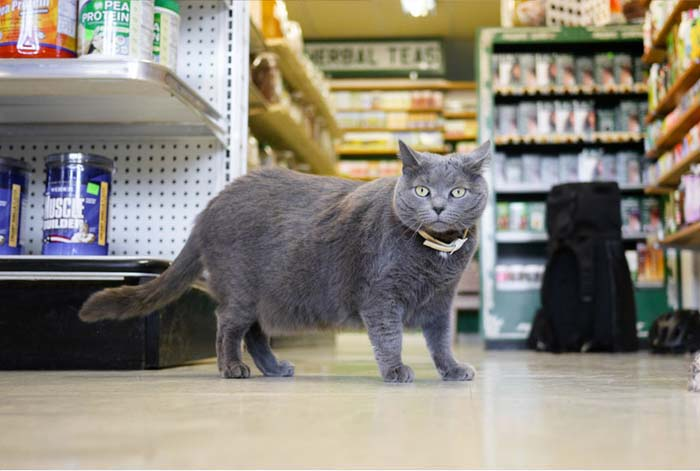 5_cat_grocery_store