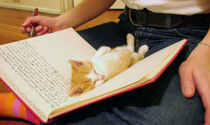 6_kitten_in_book