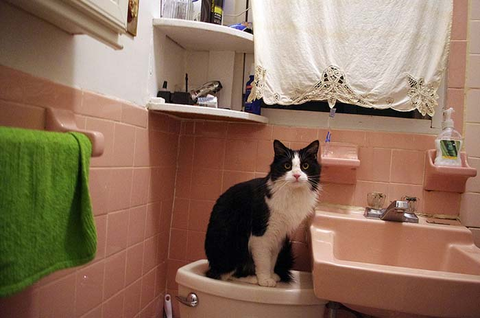 9_cat_on_toilet