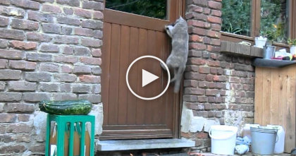 This Cat Wants Inside, But Just WATCH And See What He Does… You Won't Believe It, WOW…
