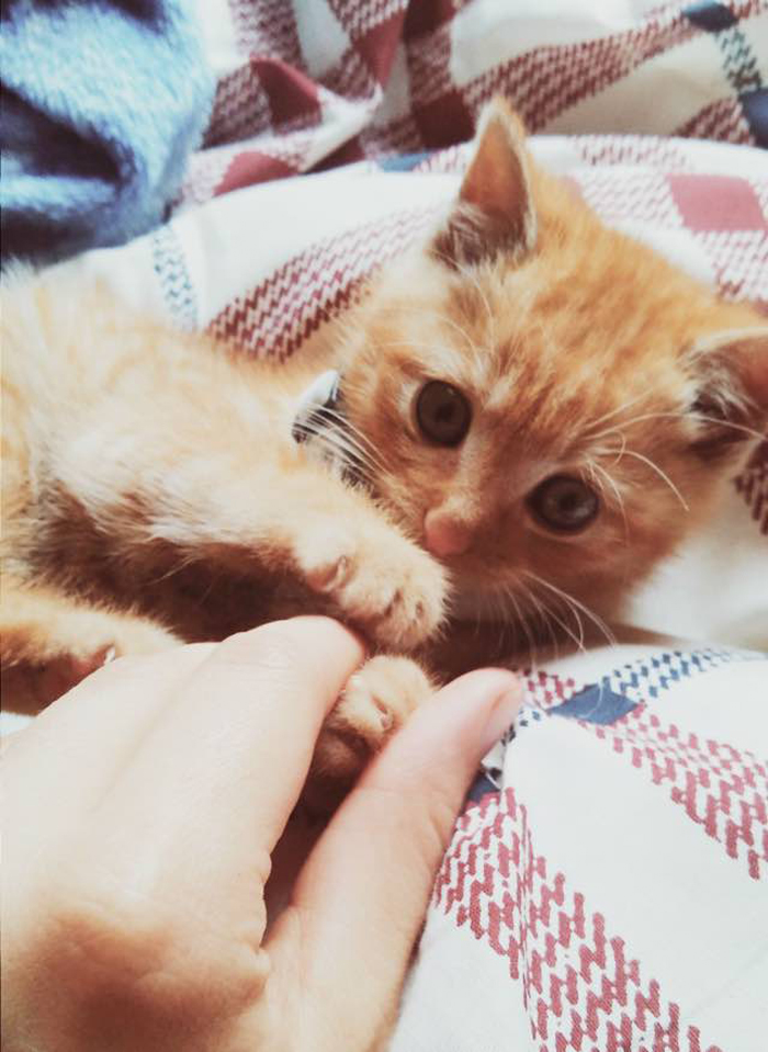 Kitten_holds_hands