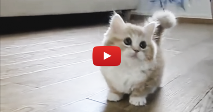 Adorable Little Kitten Gets Confused, But It's Almost TOO Cute To Handle… Awwww!!