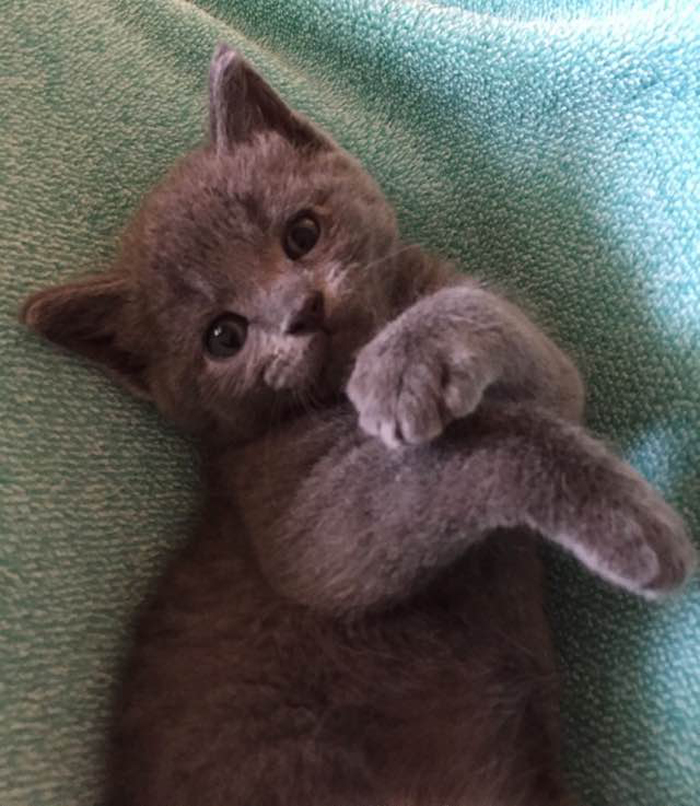 adorable_luna_kitten