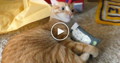 After Marmalade Recovered From Cancer, Just Watch What His Owner Did…