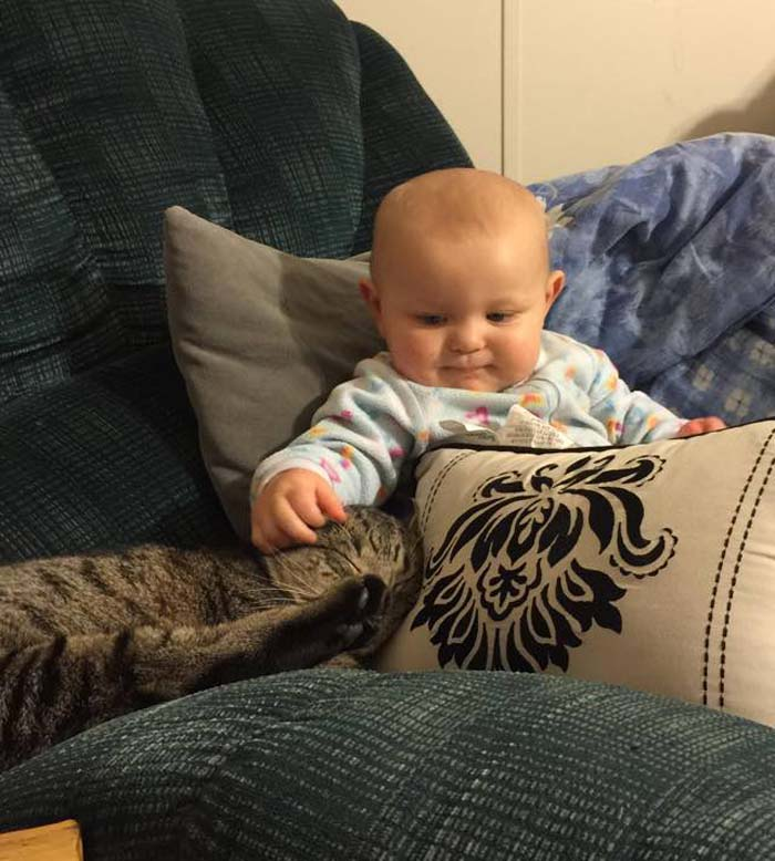cat_baby_chair