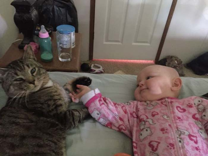 cat_baby_touching