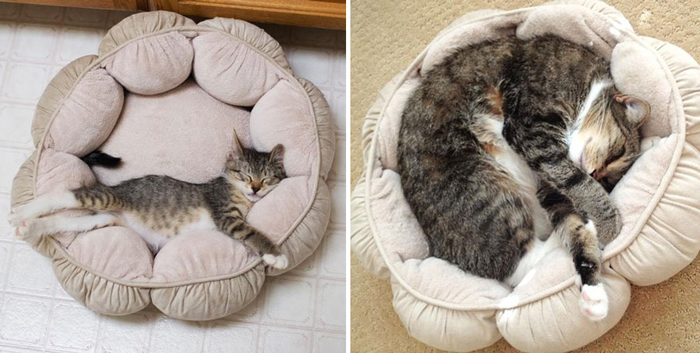 cat_in_round_bed