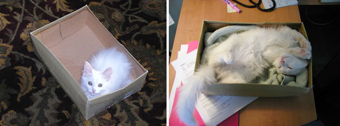 cat_in_shoebox