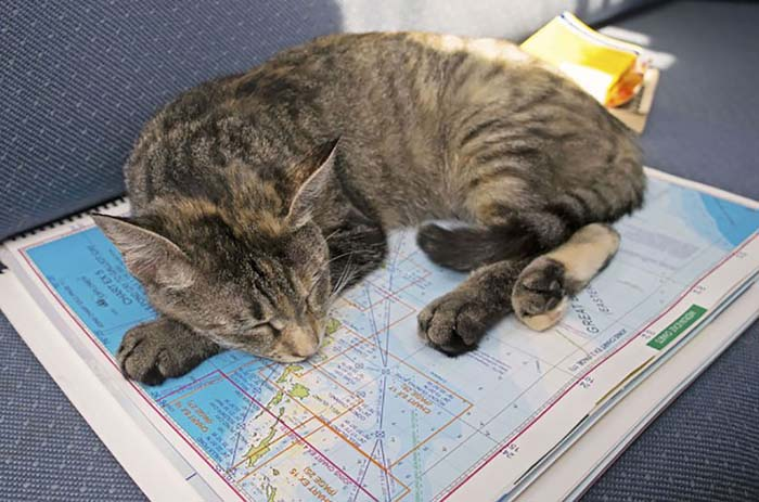 cat_navigates_the_seas