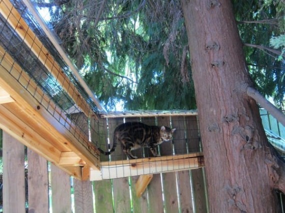catio-cat-patio-6