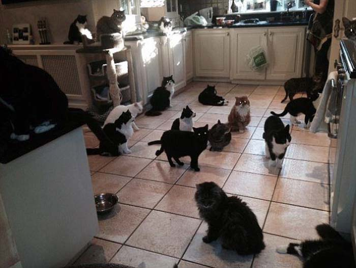cats_in_Kitchen