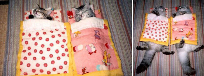 cats_sleeping bag