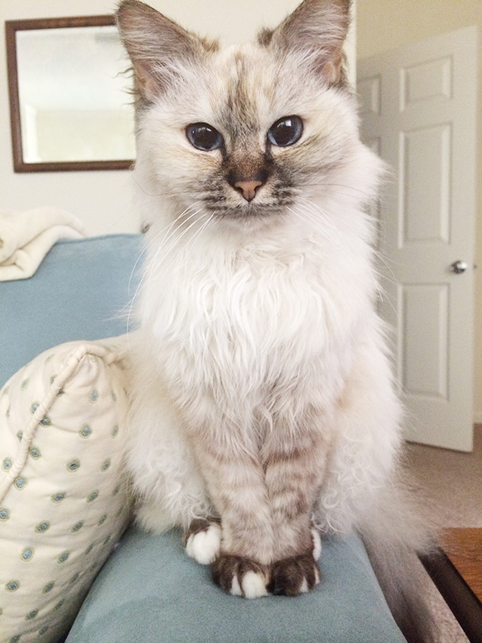 fluffy_senior_cat